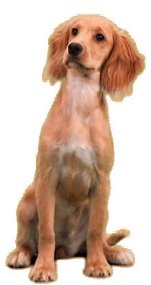dog– Google Поиск Artificial Reality, Interactive Art, Animated Gif, Models, Google, Dogs, Image, Pets, Templates