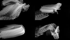 http://cargocollective.com/robertcorish/Gesture-Studies