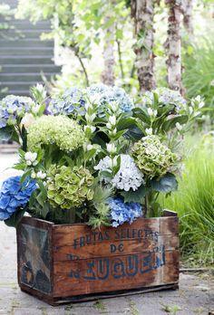 Die Hortensie steht in den Wochen 32 bis 35 auf die Blumenagenda | Blumenbüro