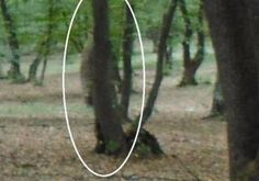 One of the worlds most haunted forest Hoia-Baciu is situated just outside Cluj Napoca the Capital of Transylvania.It is the Bermuda Triangle of Transylvania Real Ghost Pictures, Creepy Pictures, Spooky Places, Haunted Places, Hoia Baciu Forest, Real Hauntings, Lago Ness, Ghost Caught On Camera, Spirit Ghost