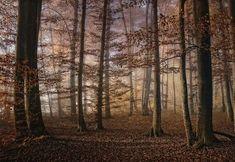 Trademark Innovations Norbert Maier 'Autumn' Canvas Art - 47 x 30 x 2 Artist Canvas, Canvas Art, Dark Tree, Fill The Frame, Parking Design, Forest Landscape, Autumn Photography, Autumn Trees, Online Art