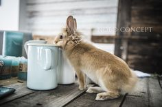 www.noboconcept.com  Bunny sharing our love for the Riess Enamel :) Bunny photo shoot at our Nobo showroom.