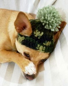 piggy hats to crochet for small dogs | Dog Crochet Hat, Hunting green Camouflage,XS or Small dog or cat with ...