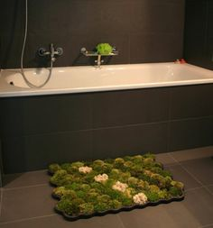 Wow if this moss actually survives just off your drippings when you get out of the shower then that is a phenomenal idea!