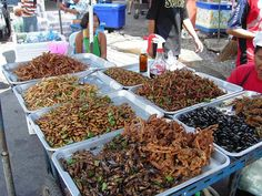 Edible Insects to Eat?