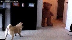 So true! pug animated GIF