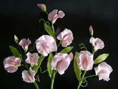 sweet pea sugar flowers