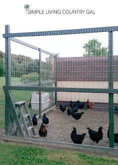 It is important to provide a safe run for your chickens so that they cannot get out and predators cannot get in.