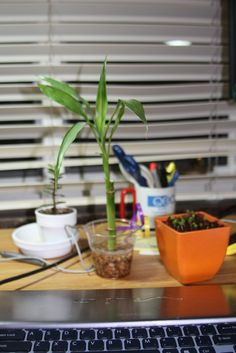 Stressed college students can benefit from plants in their dorm room. Plants provide easy dorm room décor, help freshen the air and liven up dreary spaces. Learn more in this article.