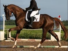 www.sporthorses-online.com 2010 Hanoverian gelding by Floriscount 17 hh for sale