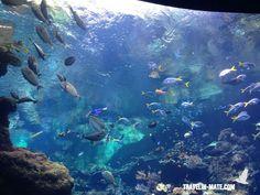 Aquarium @ California Academy of Sciences (Golden Gate Park)