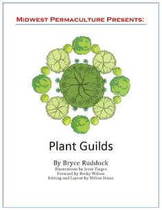 """Free Plant Guilds E-Book from Midwest Permaculture. """"Permaculture Guild"""" describe a collection of plants (a polyculture) that individually could survive on their own, but perform much better when grouped together. Forest Plants, Forest Garden, Rain Garden, Permaculture Design, Permaculture Garden, Companion Gardening, Natural Ecosystem, Growing Tomatoes In Containers, Edible Garden"""