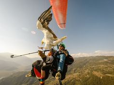 Parahawking is falconry in flight. Just with a vulture. There's only one place in the world you can do it: Pokhara, Nepal and doing it is as awesome as it sounds. Paragliding, One Week, Himalayan, Nepal, Perfect Place, Places To Go, Birds, Vulture, Adventure