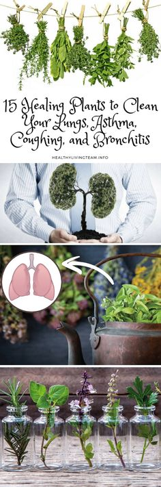 15 Healing Plants to Clean Your Lungs, Asthma, Coughing, and Bronchitis