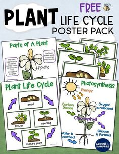 Subscribe to our newsletter and get this FREE plant life cycle anchor chart posters pack. Ideal for 1st, 2nd, and 3rd grade teachers for students learning about parts of a plant and photosynthesis. An ideal addition to your life science lessons and plant activities. A great idea for a science bulletin board too!