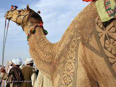 camel haircuts