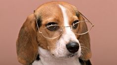 Dog Glasses View