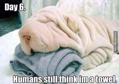 Camouflage dog blends in with the laundry
