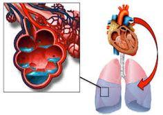 Znalezione obrazy dla zapytania left sided heart failure