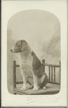 c.1910 cdv of small hound dog sitting patiently on rustic chair in front of photographer's painted backdrop. Photo by L.G. Erlanandson, Degerfors, Sweden. From bendale collection