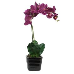 I pinned this Phalaenopsis Orchid in Lavender from the Sage & Co. event at Joss & Main!