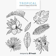 Discover thousands of copyright-free vectors. Graphic resources for personal and commercial use. Thousands of new files uploaded daily. Tropical Flower Tattoos, Tropical Flowers, Arte Hippy, Leaf Tattoos, Sleeve Tattoos, Plant Sketches, Illustration Botanique, Plant Tattoo, Flower Coloring Pages