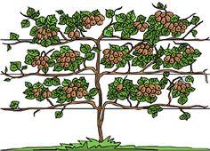 kiwi plantation taille et conseils d 39 entretien kiwi jardin potager et jardins. Black Bedroom Furniture Sets. Home Design Ideas