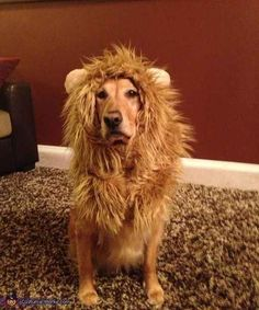 10 Dogs Disguised As Other Animals For Halloween. Lion Halloween CostumeHomemade ... & Pet Costume Lion Mane Wig for Dog Cat Halloween Clothes Festival ...