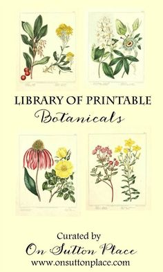 Library of Free Printable Botanicals | Stretch your decorating budget by using this library of free printable botanicals to make your own DIY wall art!