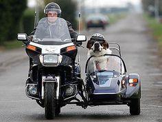 cachorro moto (1)