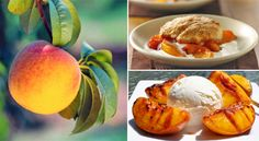 August is National Peach Month! Celebrate and enjoy some of these recipe ideas.