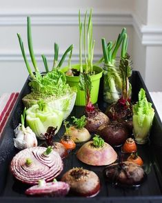 Best vegetables & herbs to regrow from kitchen scraps in water or soil. Start a windowsill garden indoors, or grow foods using grocery lettuce, beets, etc! garden diy 12 Best Veggies & Herbs to Regrow from Kitchen Scraps Garden Types, Veg Garden, Edible Garden, Herb Garden Design, Vegetable Garden Design, Herb Garden Pallet, Garden Hose, Inside Garden, Diy Herb Garden