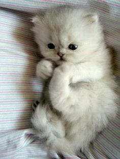 kitten. I want one. That will stay this  size. I actually had a dream once that I invented a kitten that stayed kitten size.