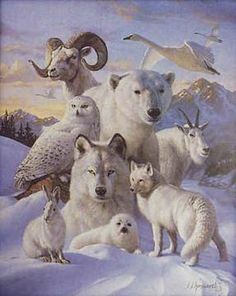 Animal Totems and or Animal Guides - Guided Spirits Polar Animals, Animals And Pets, Cute Animals, Polar Bear, Wild Animals, Animals Beautiful, Spirit Animal Totem, Animal Spirit Guides, Native Art