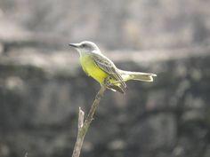 Little yellow #bird #birdphotography