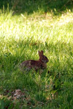 #Cheatham Annex #Campgrounds is surrounded by wooded areas that are filled with wildlife. Peaceful #RVlife.