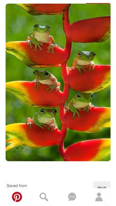 Cute little group of tree frogs. Nature Animals, Animals And Pets, Baby Animals, Funny Animals, Cute Animals, Wild Animals, Cute Creatures, Beautiful Creatures, Animals Beautiful