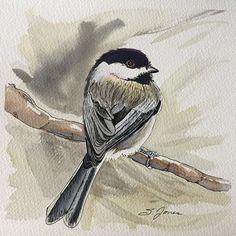 Pen and watercolor chickadee - beautiful!