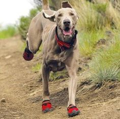 Go Hiking Doggy Style: Tips for Hiking with Your Dog - Backpacking - Hunde Hiking Dogs, Camping And Hiking, Camping Hacks, Backpacking Tips, Camping Checklist, Camping Ideas, Outdoor Camping, Dog Boots, Dog Travel