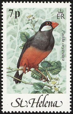 Java Sparrow stamps - mainly images - gallery format