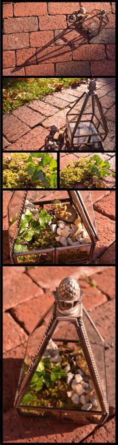 DIY terrarium. Like Anthropologie — but CHEAPER.