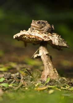 Toadstool and frog ....they have a place in my garden too.