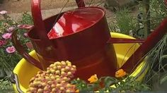 Garden expert Mark Gibbs from The Great Outdoors shares what plants you should have to attract insects you want to have around. http://www.fox7austin.com/good-day/140366617-story