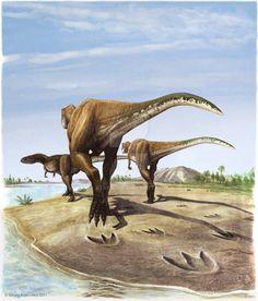 Megalosauripus by atrox1.deviantart.com on @DeviantArt