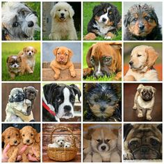 Are small dog breeds adorable? Even more adorable and cute is the puppies of the small dog breeds. Here below is a list some of the cutest puppy in the world and their breed. Teacup Dog Breeds, Teacup Puppies, Cat Breeds, Cute Puppies, Puppies Puppies, Miniature Puppies, Beautiful Dog Breeds, Beautiful Dogs, Small Dog Breeds Chart
