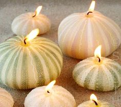 sea-urchin candles