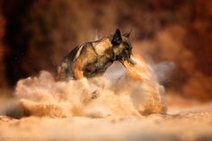 taste a little bit sandy - null All Types Of Dogs, Puppies, Berlin, Pets, Animals, Amazing, Pet Dogs, Cubs, Animales