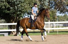 The Flying Change Formula-Teach your horse a reliable flying lead change in 10 steps.