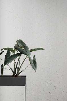 Macetero Plant Box - Novedades   | DomésticoShop