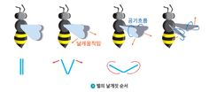 곤충 비행 과정 - Google 검색